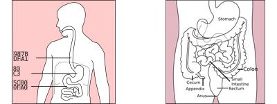 gyomorspecialista